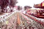 Carnival and Tulips