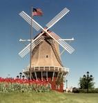 Tulip Festival Windmill