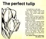 Perfect Tulip
